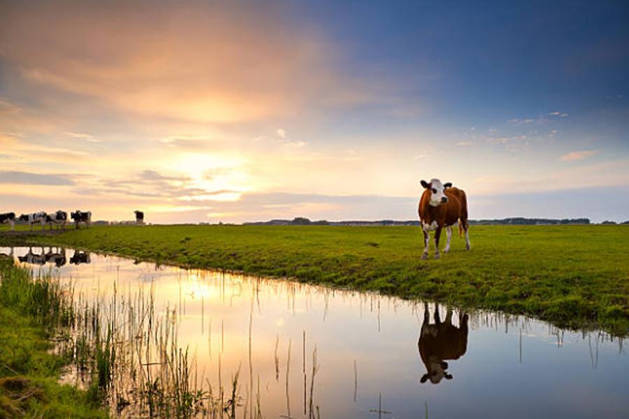 3dutcherfamers-holland-cow